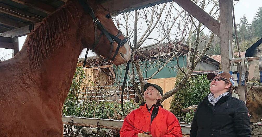 Meet Ferdinand – unser neues Ausbildungspferd